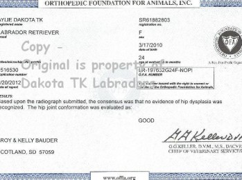 OFA Certificate for Black Female Labrador Retriever owned by Dakota TK Labradors
