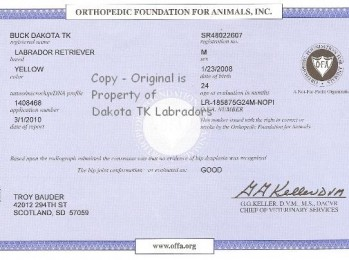 OFA Certificate for Yellow Male Labrador Retriever owned by Dakota TK Labradors