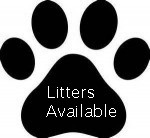 LITTERS AVAILABLE