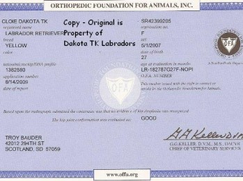 OFA Certificate for Yellow Female Labrador Retriever owned by Dakota TK Labradors