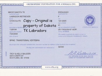 OFA Certificate for Chocolate Female Labrador Retriever owned by Dakota TK Labradors